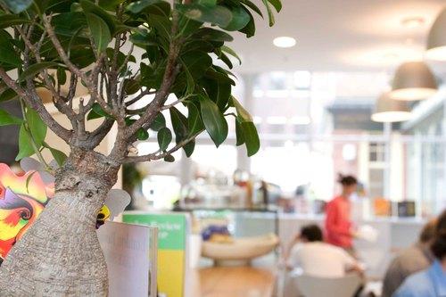 Cafe_lrb50