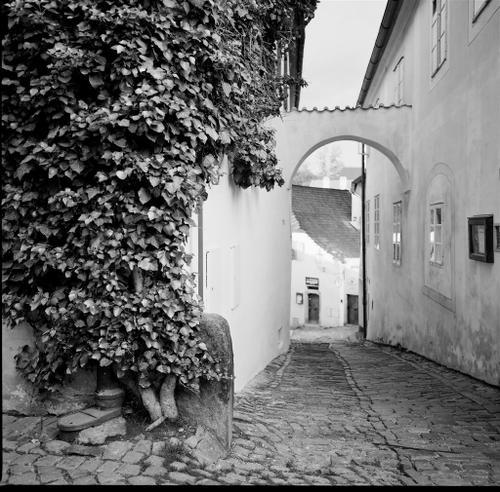 Ivy clad passageway