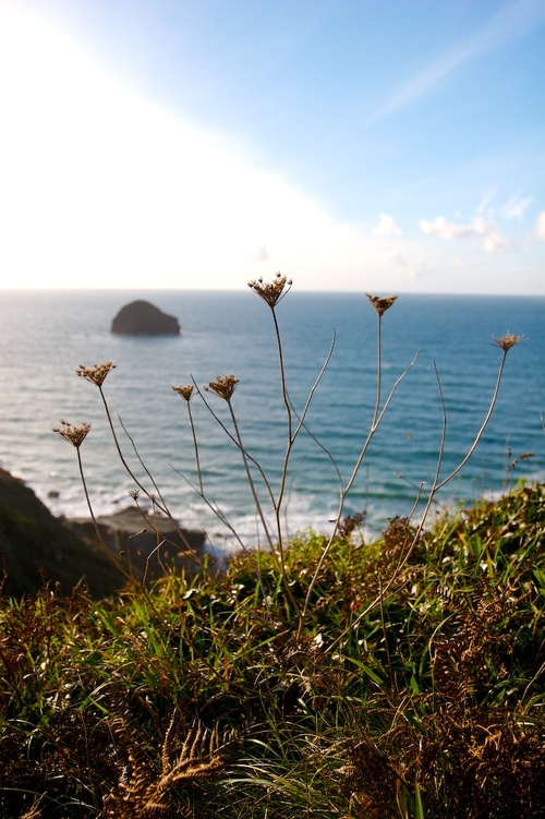 Cornwall_october_10_img_4297