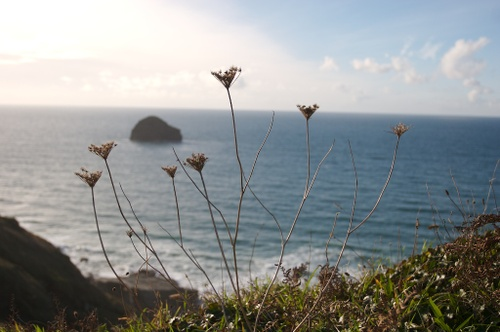 Cornwall_october_9_img_4296
