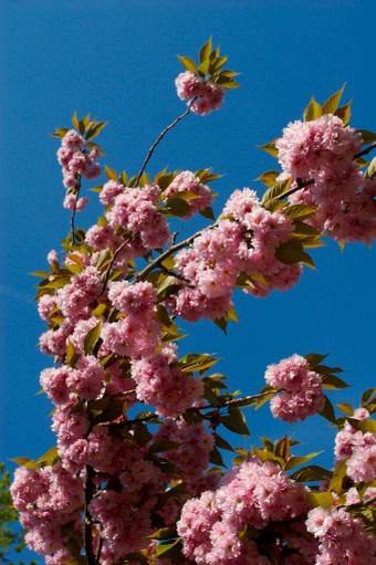 Blossom_001